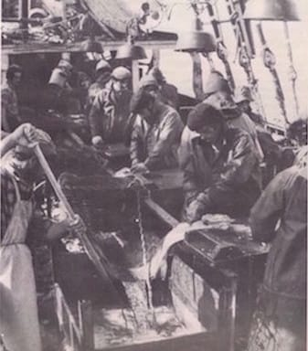fishermen fresh codfish