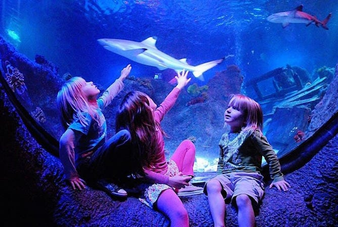 kids watching sharks