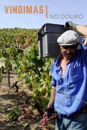 vindimas vinicolas douro portugal