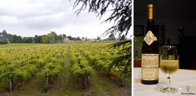 palacio brejoeira green wine tasting vineyards
