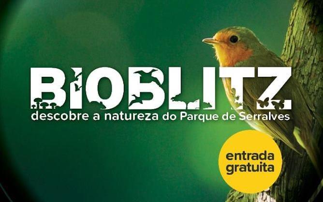 eventos porto bioblitz serralves