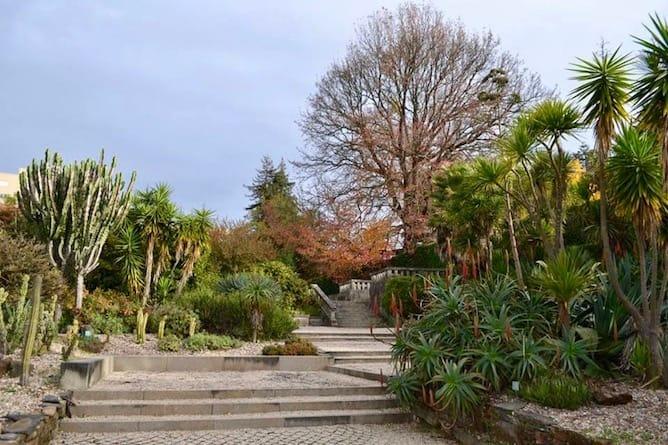 jardim botanico porto plantas-suculentas