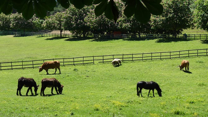 jardins serralves animais