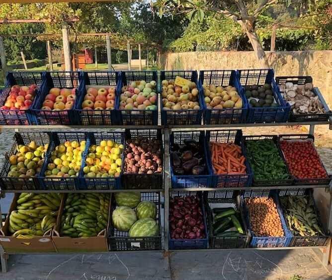 organic farmers market porto parque cidade