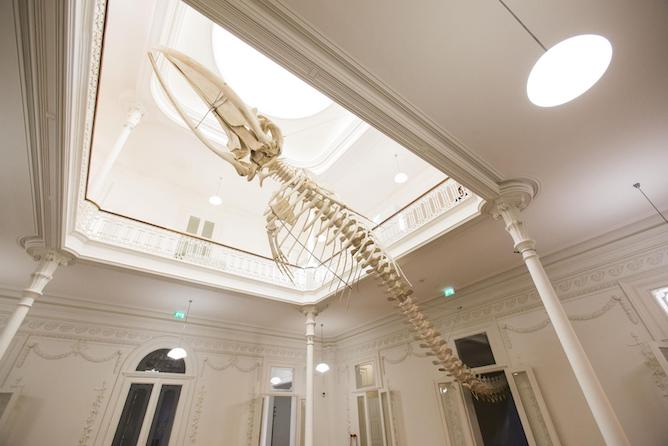 biodiversity gallery porto whale skeleton