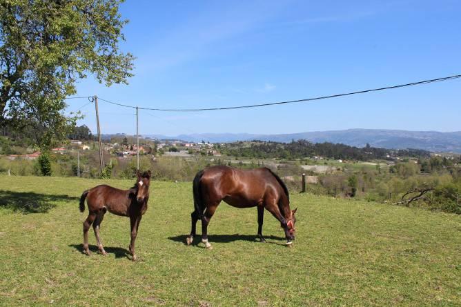 places ride horses porto