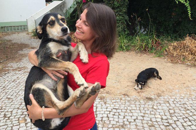 associacao animais rua ajudar animais porto