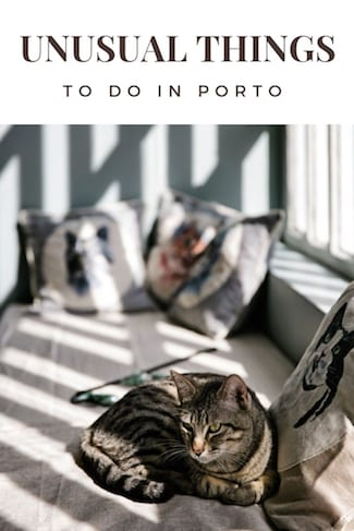 unusual things to do in porto visit cat cafe