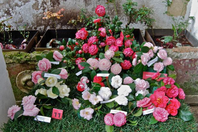 quinta vilar d allen flores porto