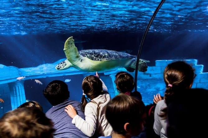 sea life porto children watching sea turtle