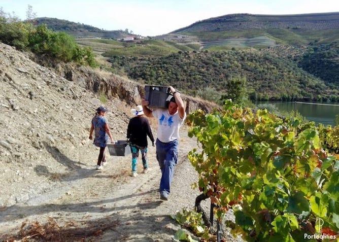 farmers douro valley