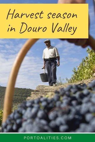 grape basket harvest season douro valley
