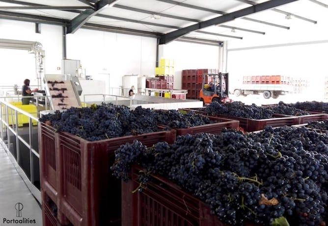 grape selection table