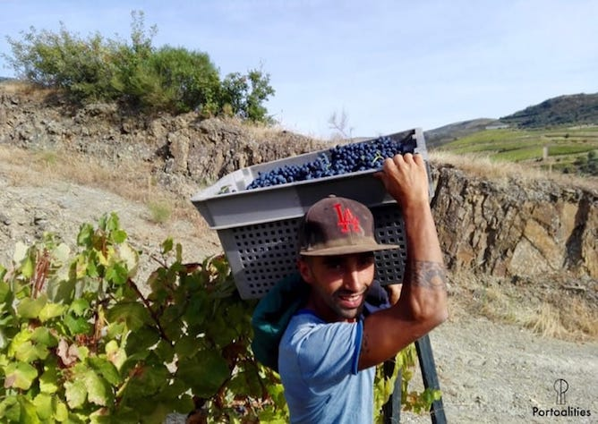 man carrying basket full grapes harvest douro valley