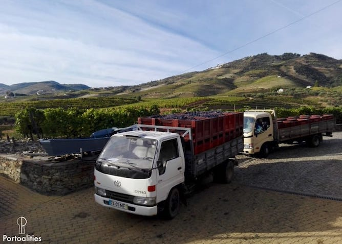 truck grapes harvest douro valley