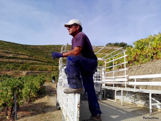 truck grapes worker douro valley
