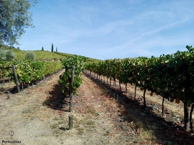 vines douro valley portugal