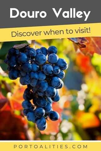 best time to visit douro valley grapes autumn