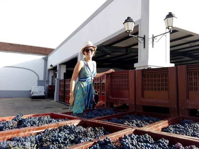 harvest season douro valley grapes