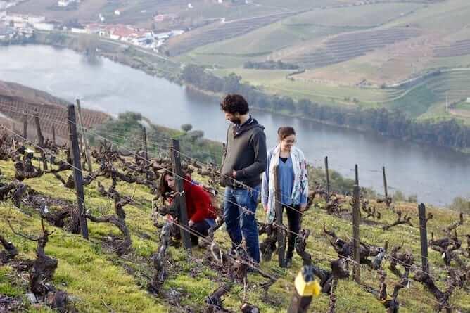 vinicolas douro durante inverno