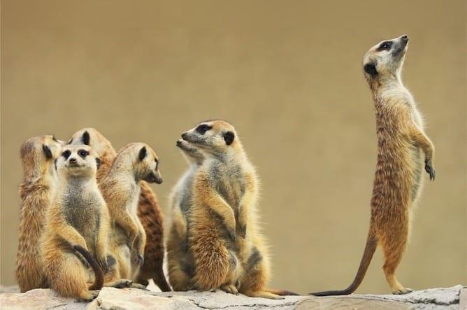 best zoos in porto