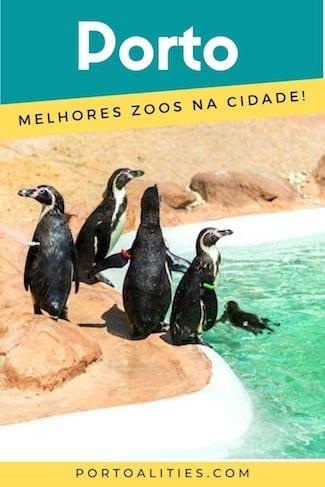 jardins zoologicos perto porto pinguins nadar