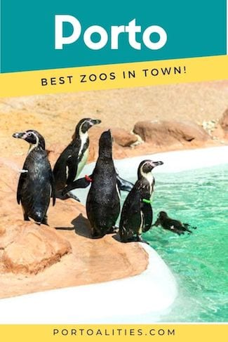penguins swimming best zoos in porto