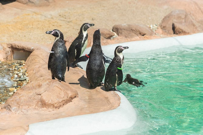 pinguins sea life porto